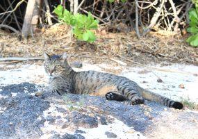 猫にとってもハワイは楽園
