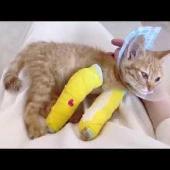 名前のない難病を患う保護猫チャッピー