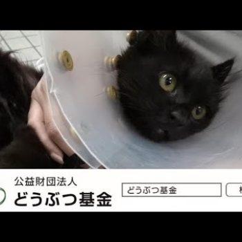 いのちをつないだ黒猫のモカ