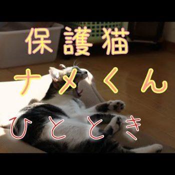 保護猫カナメくんの日常_どうぶつ基金_