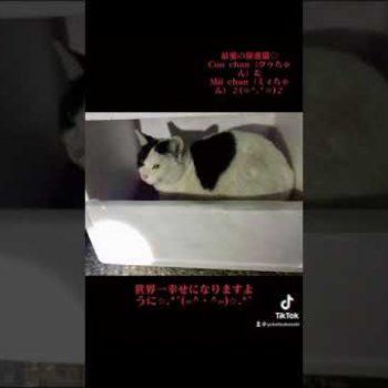 最愛の保護猫♡(=^・^=)♡ Coo chan(クゥちゃん)& Mii chan(ミィちゃん)♪ฅ^• ·̫ •^ฅ