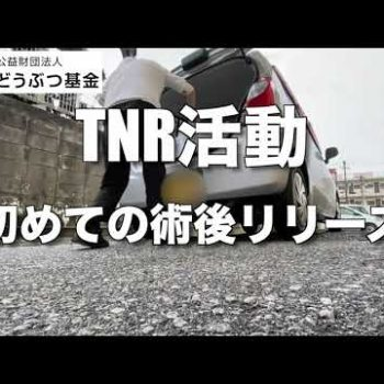【どうぶつ基金】TNR活動 初の術後リリース