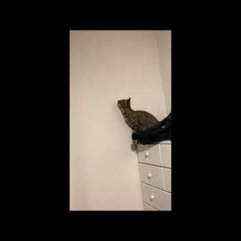 仔猫の身体能力は凄い