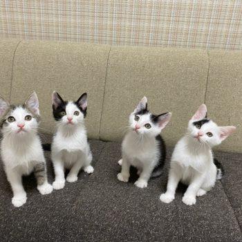 捕獲器の中で生まれた子猫たち