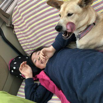 保護犬との暮らしは楽しいよ!